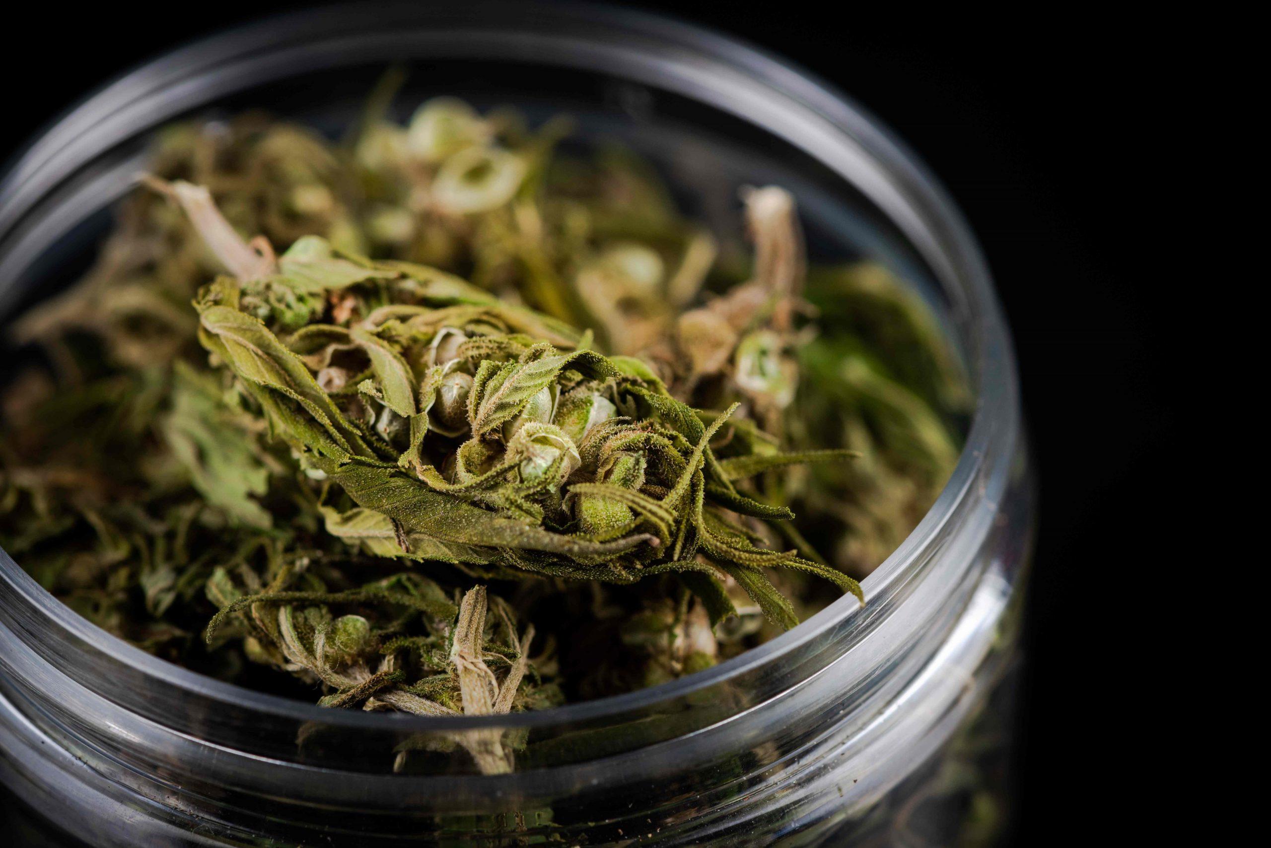 Aprobado el uso lúdico o recreativo de la Cannabis - PosdataMx
